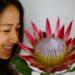 Hanako.tokyoさんで「前田有紀のおうちで気分展<花>」始まりました!